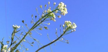 Какво не знаем за лечебните билки