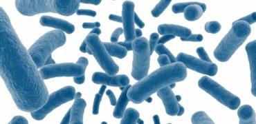 Как да изберете най-добрия пробиотик – незаменим помощник за здраве и имунитет